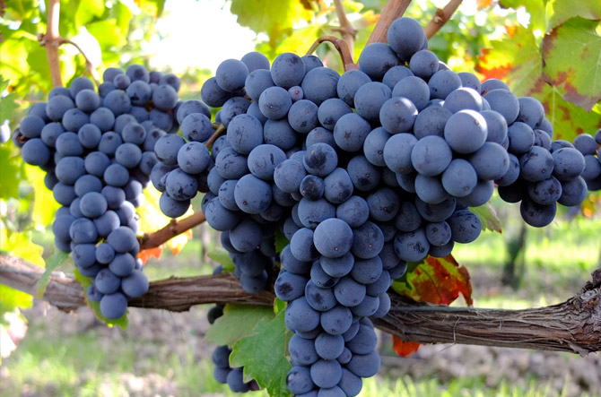 Etna Wine Tour visita vigneti