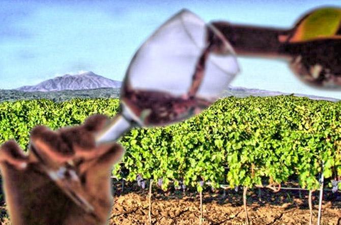 Etna Wine Tasting Tour
