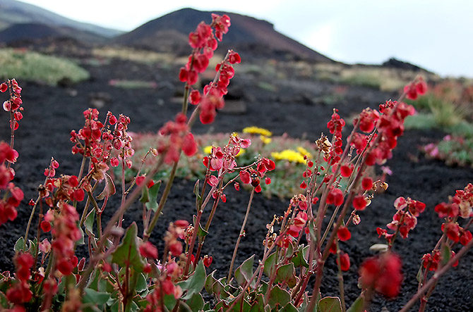 Vegetazione endemica Etna Morning