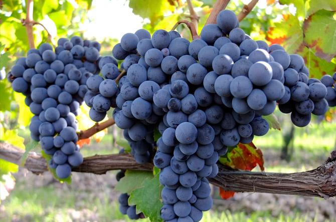 Etna et Vin paysage vignoble