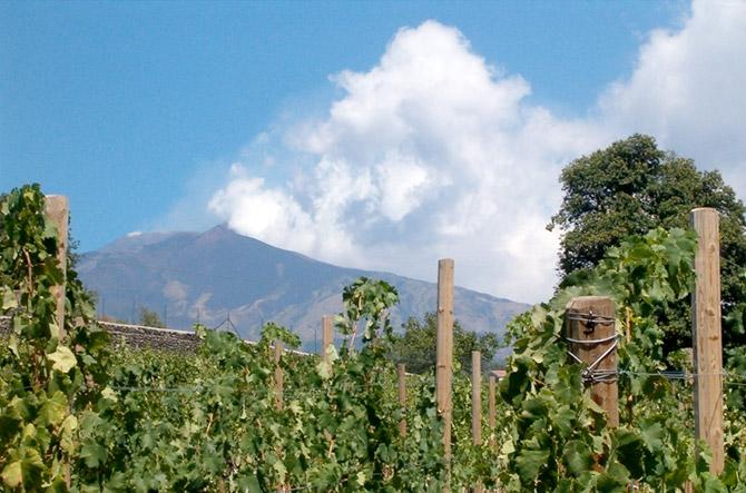Etna et Vin tour promenade entre les vignobles